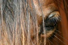 Auge eines Pferds Lizenzfreies Stockfoto