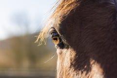 Auge eines schönen Pferds stockbilder