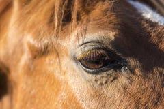 Auge eines schönen Pferds stockfotografie