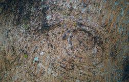 Auge im Holz lizenzfreie stockfotografie