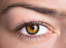 Auge mit Uhr Stockbild