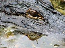 Auge und Kopf des Krokodils Lizenzfreie Stockfotografie