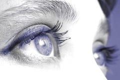 Auge VIII Stockfoto