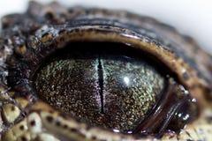 Auge von Junges Nil-Krokodil Crocodylus niloticus mit einer schmalen Pupille im hellen Licht wird ein wenig durch a geschlossen stockfotografie
