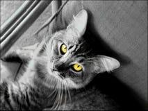 Augen Stockfotografie