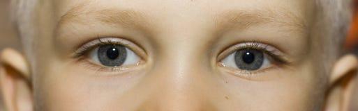 Augen Lizenzfreies Stockbild