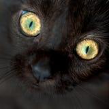Augen der Nahaufnahme der schwarzen Katze Lizenzfreies Stockfoto