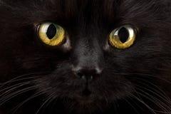 Augen der schwarzen Katze Lizenzfreies Stockfoto