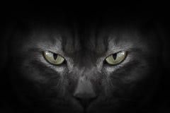 Augen der schwarzen Katze in der Dunkelheit Lizenzfreie Stockfotografie