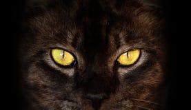 Augen der schwarzen Katze in der Dunkelheit Lizenzfreie Stockfotos