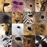 Augen der Tiere stockbild