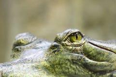 Augen des Alligators lizenzfreies stockfoto