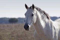 Augen des Pferds Lizenzfreies Stockbild