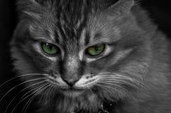 Augen einer Katze Lizenzfreie Stockfotografie