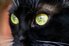 Augen einer Katzennahaufnahme Lizenzfreie Stockbilder