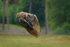 Augen eines Adlers lizenzfreies stockbild