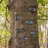 Augen geschnitzt im Baumstamm Stockfoto