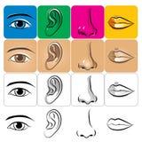 Augen-Ohr-Wekzeugspritzen-Lippe Lizenzfreie Stockfotos