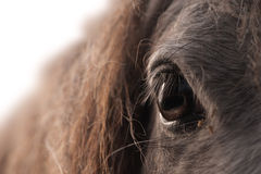 Augen-Pferd Lizenzfreie Stockfotografie