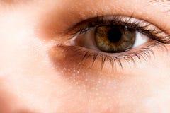 Augenkonzentrationsabschluß oben Lizenzfreie Stockfotografie