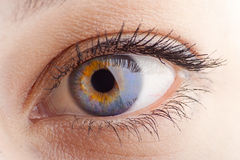 Augennahaufnahme Lizenzfreies Stockfoto
