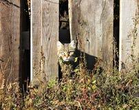 Auges do gato atrás de uma cerca Imagem de Stock Royalty Free