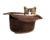 Auges pequenos de um gatinho fora de um chapéu Imagens de Stock Royalty Free