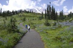 Augmentant dans Mt Rainier National Park Photos stock