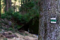 Augmentant la marque sur l'arbre dans les bois photos stock