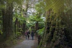 Augmentant le voyage à hurler Billy Falls parmi des arbres de forêt tropicale et de fougère, le Nouvelle-Zélande photo stock