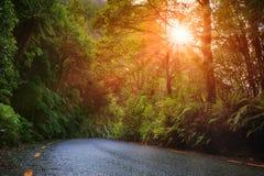 augmentation du soleil et forêt de fougère d'humidité photographie stock libre de droits