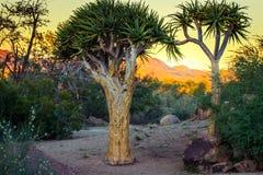 Augrabies cai cabo do norte África do Sul do parque nacional Imagens de Stock Royalty Free