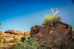Augrabies cai cabo do norte África do Sul do parque nacional Fotos de Stock Royalty Free