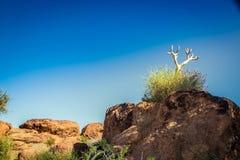 Augrabies cai cabo do norte África do Sul do parque nacional Imagem de Stock Royalty Free