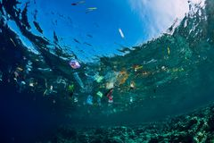 Free August 28, 2018. Bali, Indonesia. Underwater Ocean With Plastic And Plastic Bags, Ecological Problem Royalty Free Stock Images - 160518889