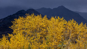 August 25, 2016 - Autumn color and foreboding Mountains in distance are seen off Richardson Highway, Route 4, North of Paxon, Alas Stock Photography