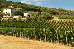 12 August 2017: Beautiful Vineyard with blue sky in Chianti region. Located near Florence, Tuscany. stock images