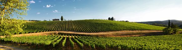 12 August 2017: Beautiful vineyard and blue sky in Chianti, Tuscany. Italy royalty free stock images
