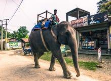 25. August 2014 - bemannen Sie das Reiten eines Elefanten in Sauraha, Nepal Stockfoto