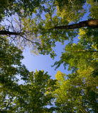 August Canopy Royalty Free Stock Image
