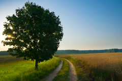 August countryside landscape Stock Image