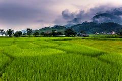 21. August 2014 - Felder von Pokhara, Nepal Lizenzfreie Stockbilder