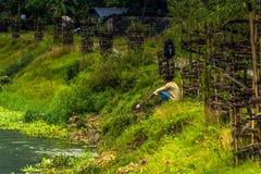21. August 2014 - Fischerin im Phewa See in Pokhara, Nepal Lizenzfreies Stockbild