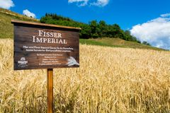 15 august 2018, Fiss Austria: Fisser Imperial barley field royalty free stock photography