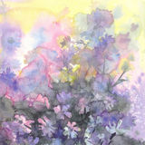 August meadow flowers watercolor background Stock Photography