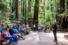 August 10, 2018 Mill Valley / CA / USA - Volunteer at the Muir Woods National Monument giving a presentation to a group of. Tourists on a wooden deck surrounded royalty free stock image