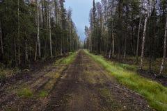 26. August 2016 - Schotterweg durch die Mitte eines alaskischen Waldes Stockfoto