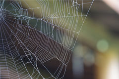 August Spiderweb. A spiderweb caught in early August Royalty Free Stock Photo