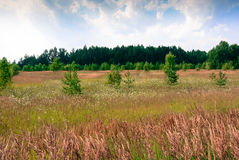 August. Summer landscape with colorful field. In the background the green forest Royalty Free Stock Photo