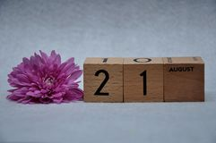 21 August on wooden blocks with a pink daisy. On a white background royalty free stock image